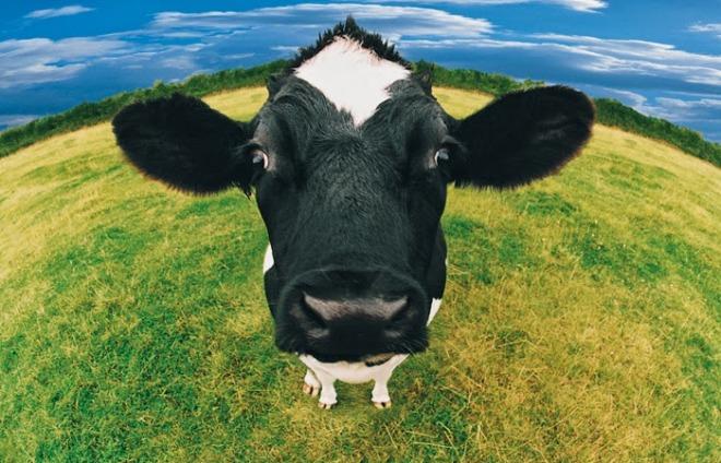 vaca-hg-20120801