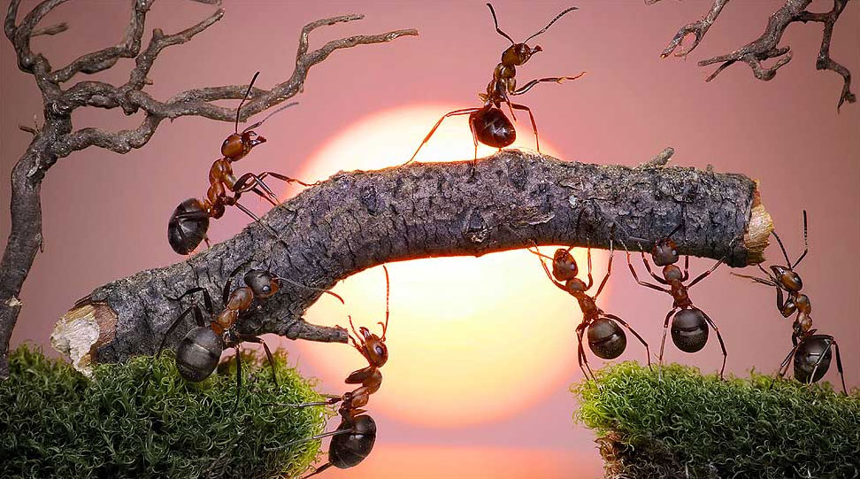 formigas-fotos-conto-de-fadas-fotografo-russo-Andrey-Pavlov